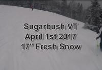 April Fools Powder Sugarbush
